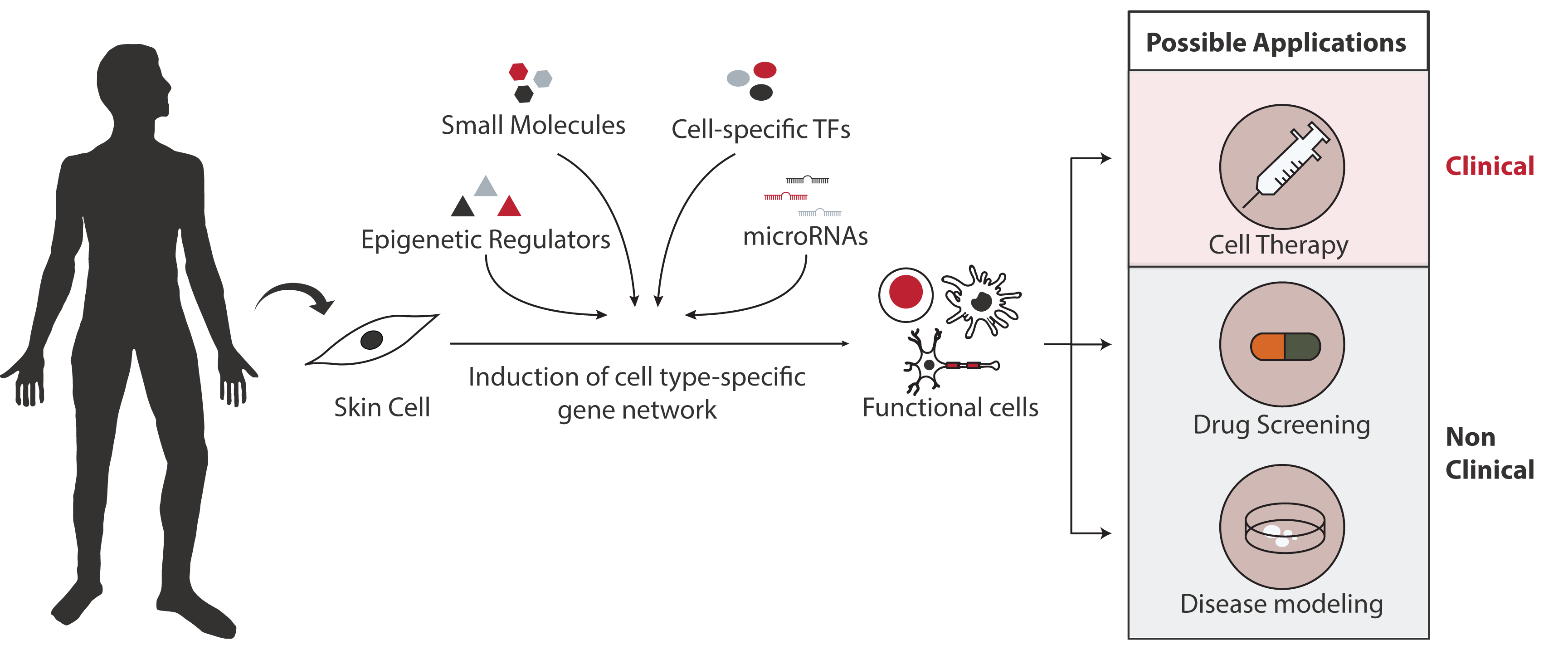Direct cell reprogramming blood reprogramming technologies instead of making induced pluripotent stem cells from a patients adult cells and differentiating them to other cell types over an extended period of time pooptronica